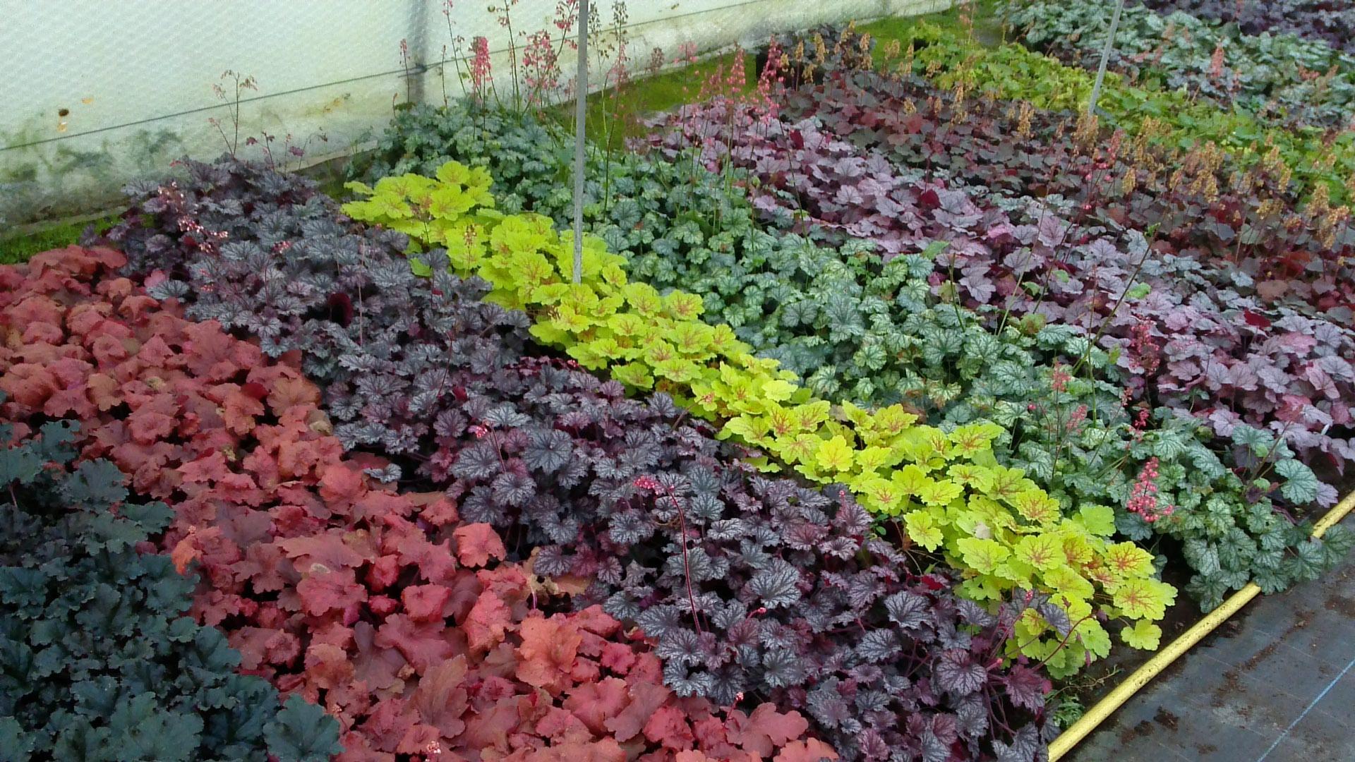 Vente de plantes en ligne for Vente de plantes en ligne